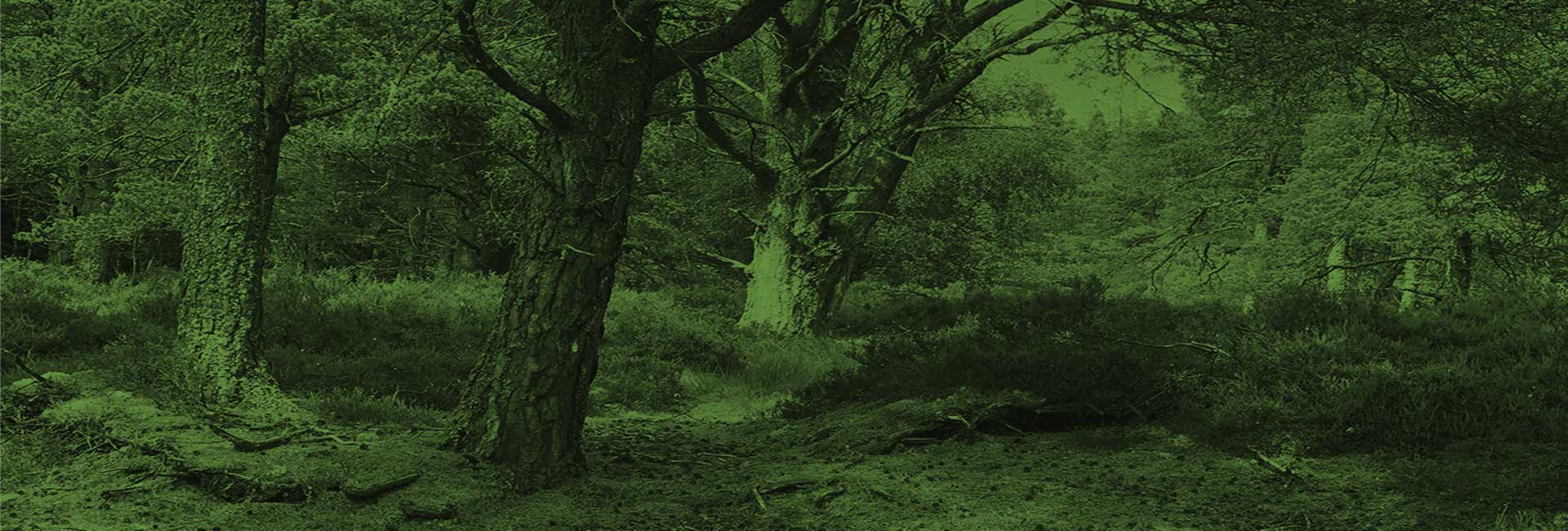 Mulben Forest